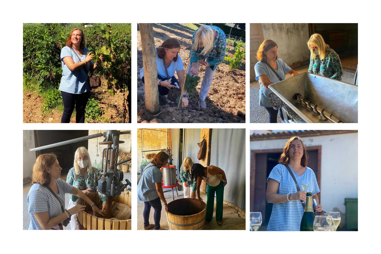 Diferentes escenas de la visita al viñedo
