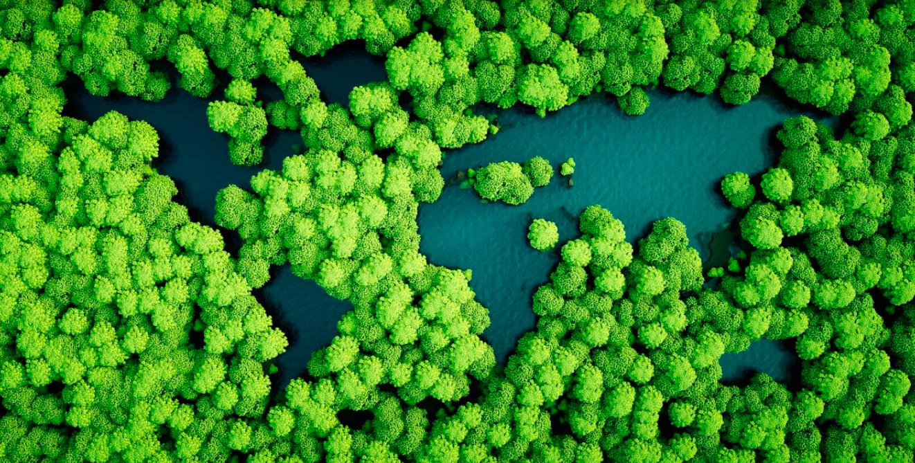 imagen que representa sostenibilidad