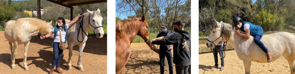 escenas de personas interactuando con caballos